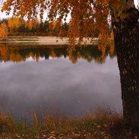 У берез и сосен тихо бродит осень :: Татьяна Ломтева