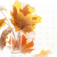 Осень в городе :: Ирина Миндрина