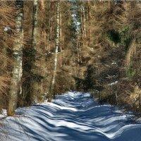 лесными тропами :: sergej-smv