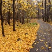 Есть подозрение, что - Осень IMG_2705 :: Андрей Лукьянов