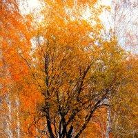#Осень#дерево :: Alena Kazanceva