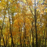 Осень в парке. :: НАДЕЖДА КЛАДЧИХИНА