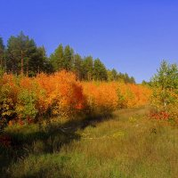Осень в лесу :: лидия Кашицина