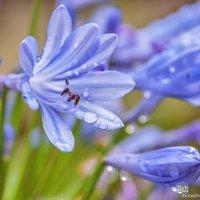 Голубой цветочек. :: Ирина Токарева