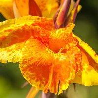 Желтый цветок. :: Ирина Токарева