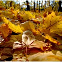 ...ах...осень... :: Александр Липецкий