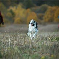 Псовая охота... :: Виктор Перякин
