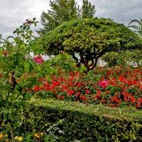 В садах Хенералифе :: Ольга Маркова