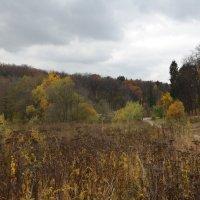 Осень. Пасмурно. :: Oleg4618 Шутченко