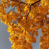 Золотая осень :: Александр Ефанов