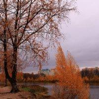 Осень, осень. унылая осень :: Татьяна Ломтева