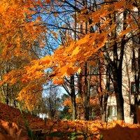Осень золотая :: Марина Шубина