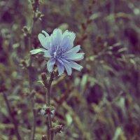 Одиночество цветка.. :: Ольга Рязанова