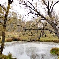 Где-то в лесу. :: Александр Максименко