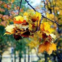 Осенние капли :: Ирина Фирсова