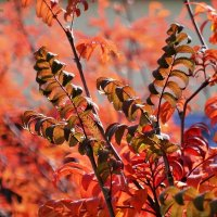 Осень, осень... :: Маргарита N