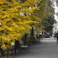 Осень в городе... :: Копыткина Юлия