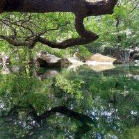 Сказочный пруд :: Алинка Гнибеда
