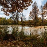 Речка в Сосновой роще. :: Андрей Гриничев