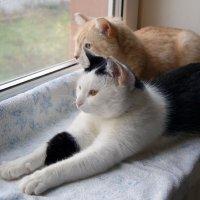 Мои коты :: Неля Некрасова