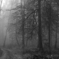 Туманный  лес.... :: Валерия  Полещикова
