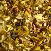 Не счесть опавших листьев... :: Нина Корешкова