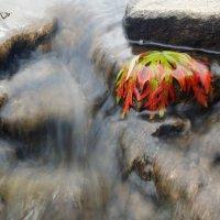 Жидкость камней :: Сергей Шаврин