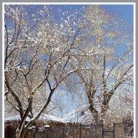 Снежные кружева 1 :: Igor Zau