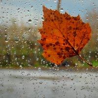 А дождь идёт... :: Tanya Sukhomlinova