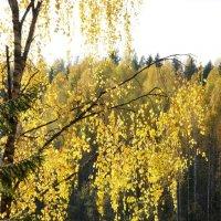 """Осень в заповеднике """"Кивач"""" :: Елена Павлова (Смолова)"""