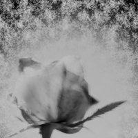 Молчание :: Мадина Девеева