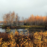 На болоте :: Татьяна Нижаде