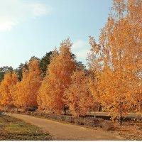 Осень золотая :: Лидия (naum.lidiya)
