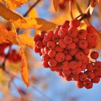 Осень! :: Светлана