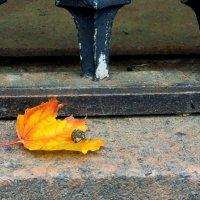 Облетают осенние листья :: Татьяна Петранова