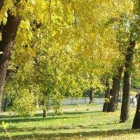 Подул ветерок и листья закружились! :: Наталья