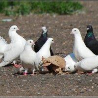 на прогулке :: linnud