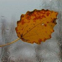 Осеннее настроение :: Илья Костин