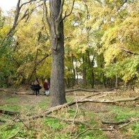 Обследуем парк после бури. :: Ирина Прохорченко
