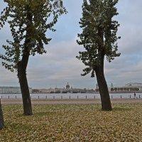 Осень под ногами :: Наталья Левина