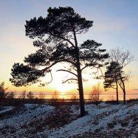 Северодвинск. Белое море, закат :: Владимир Шибинский