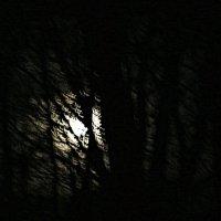 Ночь холодная,лунная... :: Михаил Лобов (drakonmick)