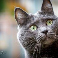 Кошка :: Андрей Третьяков ©ᵀᴿᴬᴺ