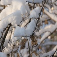 Зима - тебе и здрасьте!!! :: Павел Савин