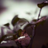 Поздняя осень :: Дмитрий Люльчак