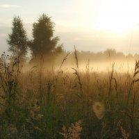 на лугу туман :: Александр С.