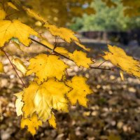 Осень :: Николай Мухачев