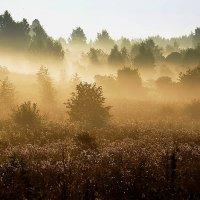 Плывут туманы белые... :: Дмитрий Строганов