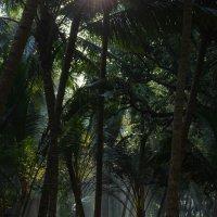 Утренний туман в джунглях :: Микто (Mikto) Михаил Носков