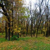 Осенний вальс... :: Тамара (st.tamara)